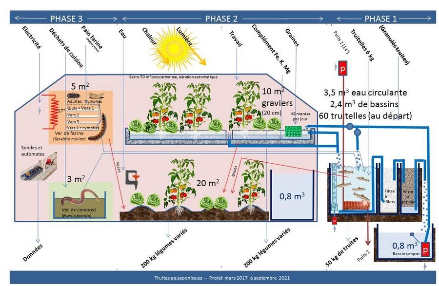 Schéma du projet de production de truites et de légumes en aquaponie