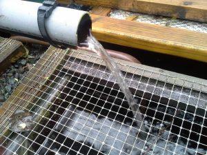 Écoulement de l'eau des bacs vers les fosses à truites