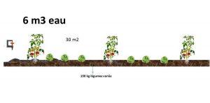Légumes en pleine terre, irrigués