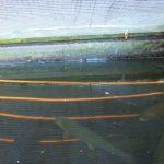 Serpentin en cuivre immergé dans un bassin aquaponique peuplé en truites