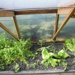 Légumes pleine terre au 15/01/2019 - vue 4