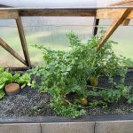 Légumes pleine terre au 15/01/2019 - vue 6