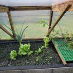 Légumes pleine terre au 15/01/2019 - vue 7