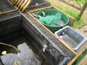 Les filtres doivent accepter le débit du système aquaponique sans déborder