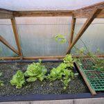 Légumes pleine terre au 15/02/2019 - vue 7