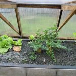 Légumes pleine terre au 01/02/2019 - vue 6