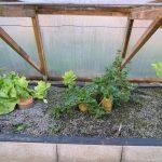 Légumes pleine terre au 15/02/2019 - vue 6