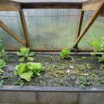 Légumes pleine terre au 01/02/2019 - vue 5