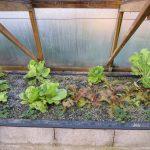 Légumes pleine terre au 15/02/2019 - vue 5