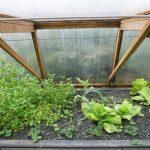 Légumes pleine terre au 01/02/2019 - vue 4