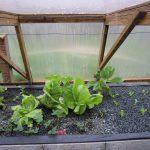 Légumes pleine terre au 15/03/2019 - vue 7