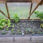 Légumes pleine terre au 15/03/2019 - vue 6