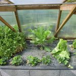 Légumes pleine terre au 01/04/2019 - vue 4
