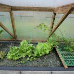 Légumes pleine terre au 02/03/2019 - vue 7