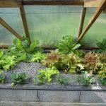 Légumes pleine terre au 01/04/2019 - vue 6