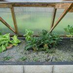 Légumes pleine terre au 02/03/2019 - vue 6