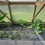 Légumes pleine terre au 01/04/2019 - vue 7