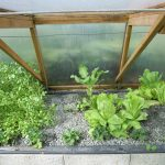 Légumes pleine terre au 02/03/2019 - vue 4