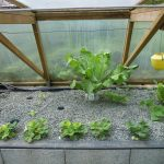 Légumes pleine terre au 15/04/2019 - vue 4