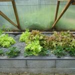 Légumes pleine terre au 15/04/2019 - vue 5