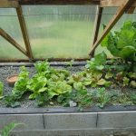 Légumes pleine terre au 15/04/2019 - vue 6