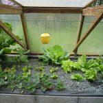Légumes pleine terre au 15/04/2019 - vue 7