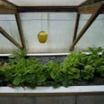 Légumes pleine terre au 01/05/2019 - vue 7