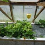 Légumes pleine terre au 01/06/2019 - vue 7