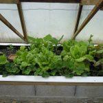 Légumes pleine terre au 01/05/2019 - vue 6