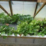 Légumes pleine terre au 01/06/2019 - vue 6