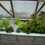 Légumes pleine terre au 01/05/2019 - vue 5