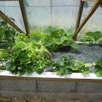 Légumes pleine terre au 01/06/2019 - vue 5