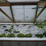 Légumes pleine terre au 01/05/2019 - vue 4