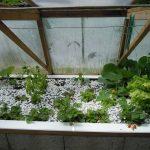 Légumes pleine terre au 01/06/2019 - vue 4