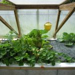 Légumes pleine terre au 15/06/2019 - vue 7