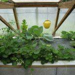 Légumes pleine terre au 01/07/2019 - vue 7
