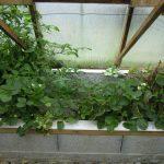 Légumes pleine terre au 01/07/2019 - vue 6