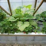 Légumes pleine terre au 15/06/2019 - vue 6
