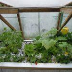 Légumes pleine terre au 15/06/2019 - vue 4