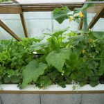 Légumes pleine terre au 01/07/2019 - vue 4