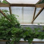 Légumes pleine terre au 15/07/2019 - vue 7