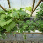 Légumes pleine terre au 15/07/2019 - vue 5