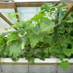 Légumes pleine terre au 15/07/2019 - vue 4