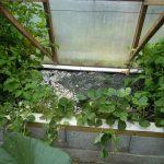 Légumes pleine terre au 01/08/2019 - vue 5