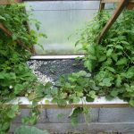 Légumes pleine terre au 15/08/2019 - vue 5