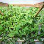 Légumes pleine terre au 01/09/2019 - vue 7