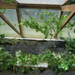 Légumes pleine terre au 15/09/2019 - vue 7
