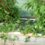 Légumes pleine terre au 01/09/2019 - vue 5