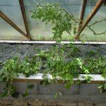 Légumes pleine terre au 15/09/2019 - vue 5