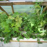 Légumes pleine terre au 01/09/2019 - vue 4